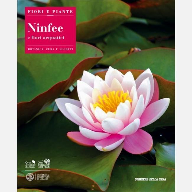 Fiori e piante ninfee e fiori acquatici italiano edicola for Fiori acquatici