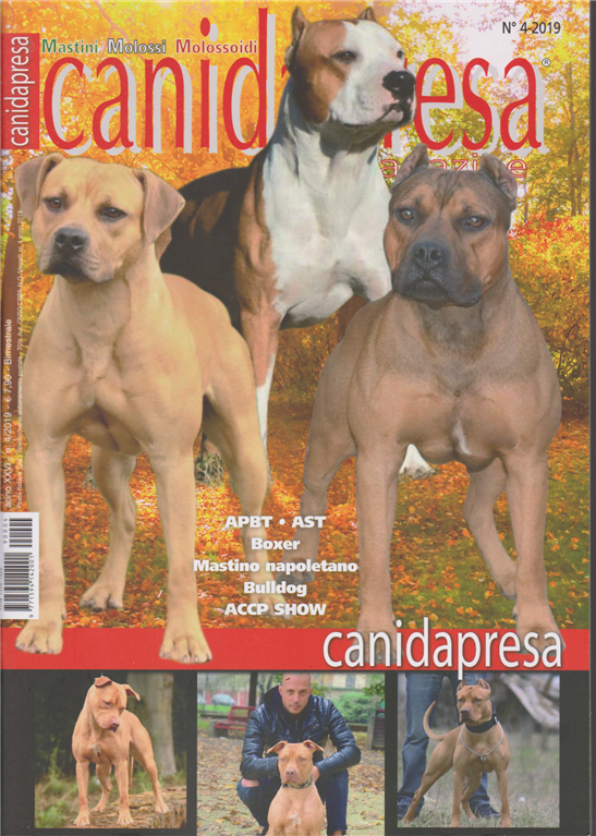 Canidapresa magazine - Mastini Molossi  Molossoidi -  n. 4 - 18/12/2019 - bimestrale