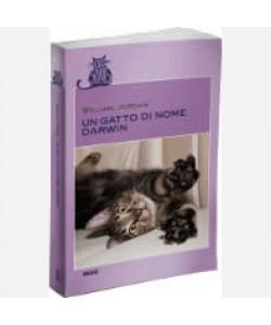 OGGI - Cats Stories