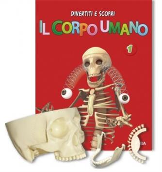 Il Corpo Umano n. 3  - Costole + vertebre cervicali +...by RBA Italia