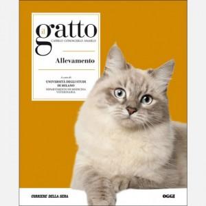 Il gatto Allevamento