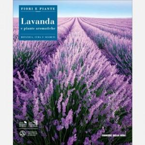 Fiori e Piante Lavanda e piante aromatiche