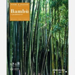 Fiori e Piante Bambù e graminacee